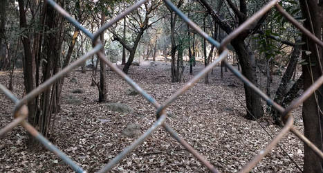 Bosque by informe