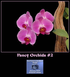 Fancy Orchids 2 by Tazzy-