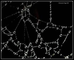 Water Web by BuckNut