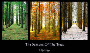 The Seasons Of The Trees by BuckNut