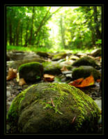 Green by WildFeathers