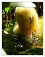Pond Kitten by WildFeathers