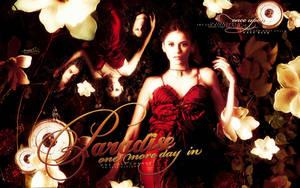 vampire diaries wallpaper 11 by mia47