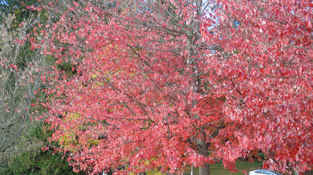 Tree changing colors by Midnight-PowerUser