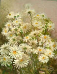 daisies by Hydrangeas
