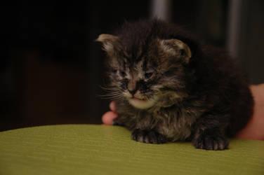 1 Week Old: Eren 2 by 1mew635