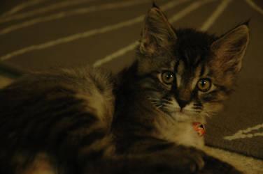1 Month Old: Eren by 1mew635