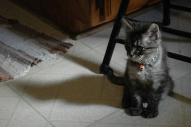 1 Month Old: Eren 2 by 1mew635