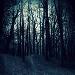Premade BG Dark Woods by E-DinaPhotoArt