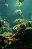 Stock Underwater 3 by E-DinaPhotoArt