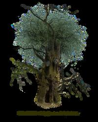 HQ PNG Stock Tree Man by E-DinaPhotoArt