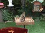 Leaning Squirrel of the Birdfeeder by Luigifan18