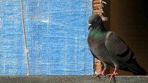 Pigeon Meditation by bogas04