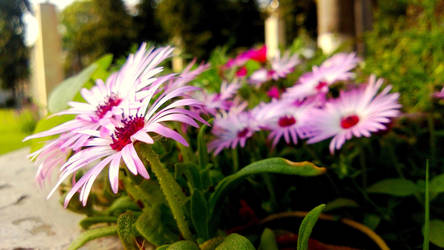 Together we Bloom by bogas04