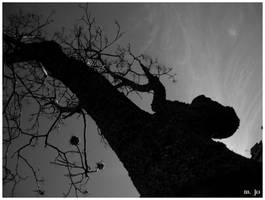 Tree. by ViuvaNegra