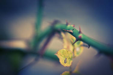 Epine. by leingad