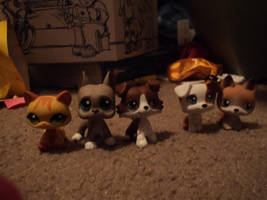 My New LPS by katieluv2sing18