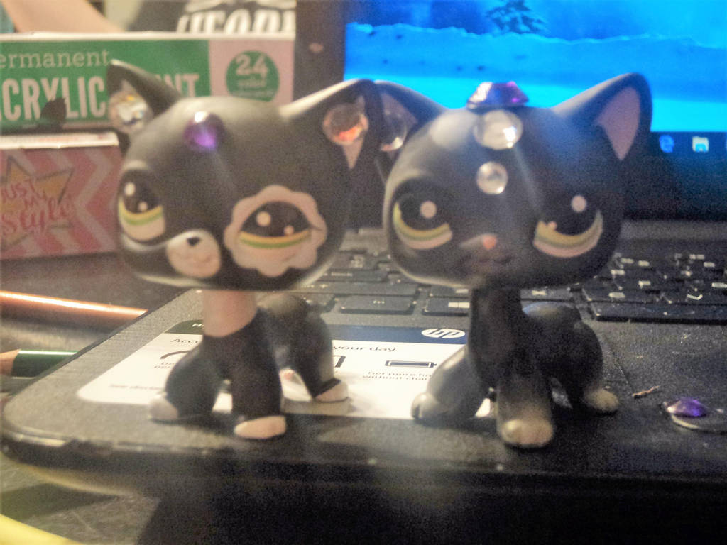 My New Lps Black Cats From Ebay By Katieluv2sing18 On Deviantart