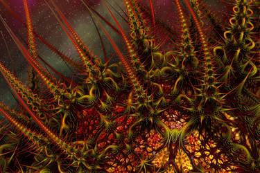 Firethorns by GrahamSym