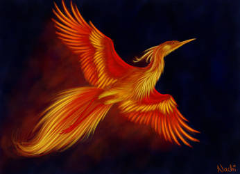 Firebird by Nachiii