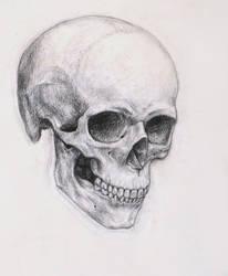 Skull by Nachiii
