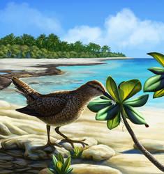 Tuamotu Sandpiper by Nachiii