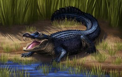 American Alligator by Nachiii