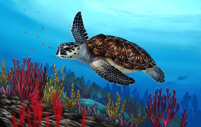 Hawksbill Sea Turtle by Nachiii