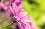 Purple Petals by Silence-
