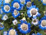 Blue Flowers by KitsuneMizuki
