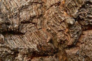 Bark Art I: Old Red by Sinande