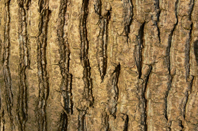 Bark Art... I lost count by Sinande