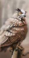 Bubo Bubo WIP/Preview by popChar