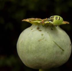 beetlejuice. by YuXin127