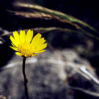 .Happy in my loneliness by tgphotographer