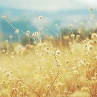 E so che sai che un giorno... by tgphotographer