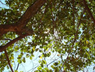 Upward Holly by Konekokasumi