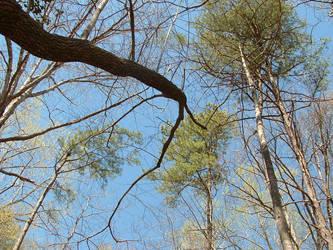 Winding Tree by Konekokasumi