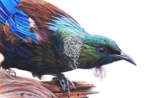 TUI by Law3208