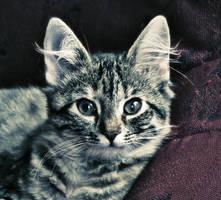 Kitty portrait by fotojenny