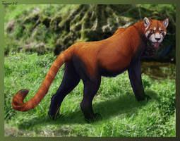 pandacat by Tacimur