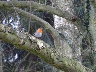 Little bird by LG-Nimbus