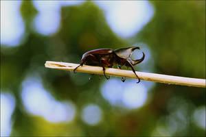 Beetlebum by qylie