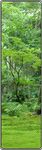 Forest decoration (f2u) by ReenvhAi