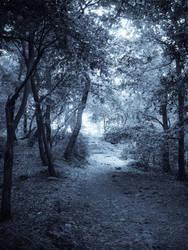 Enchanted by Nuteczka