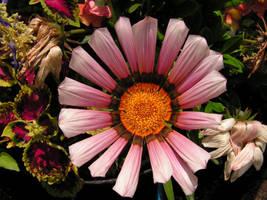 Flower by getupp
