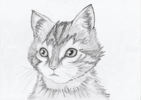 Kitten by getupp