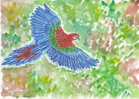 Flying macaw by getupp