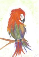 Parrot by getupp