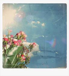 Flowers Of Summer by aksicnn